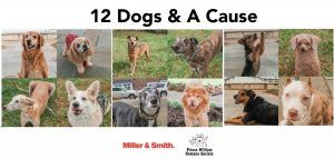 12 Dogs and A Cause
